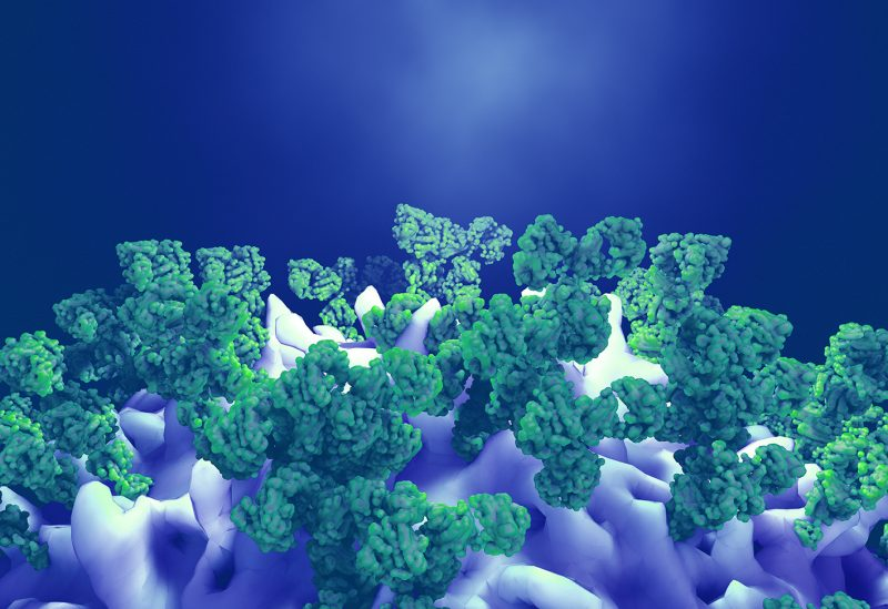 stock illustration of antibodies attacking a cancer cell or virus